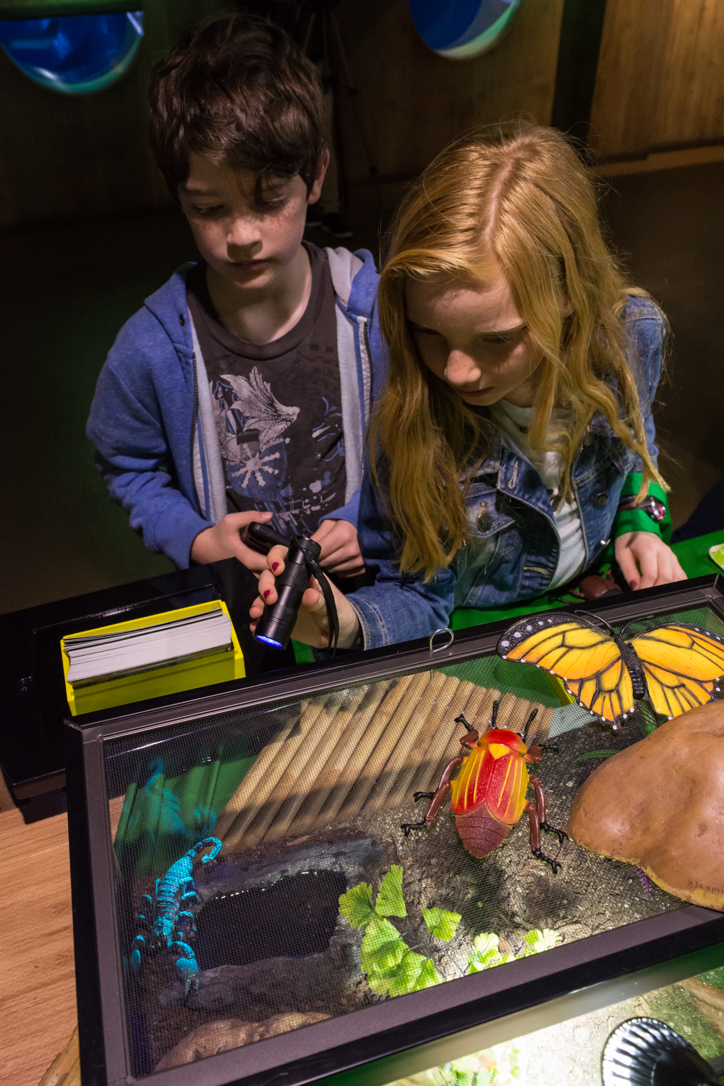 Our animal displays are interactive and educational