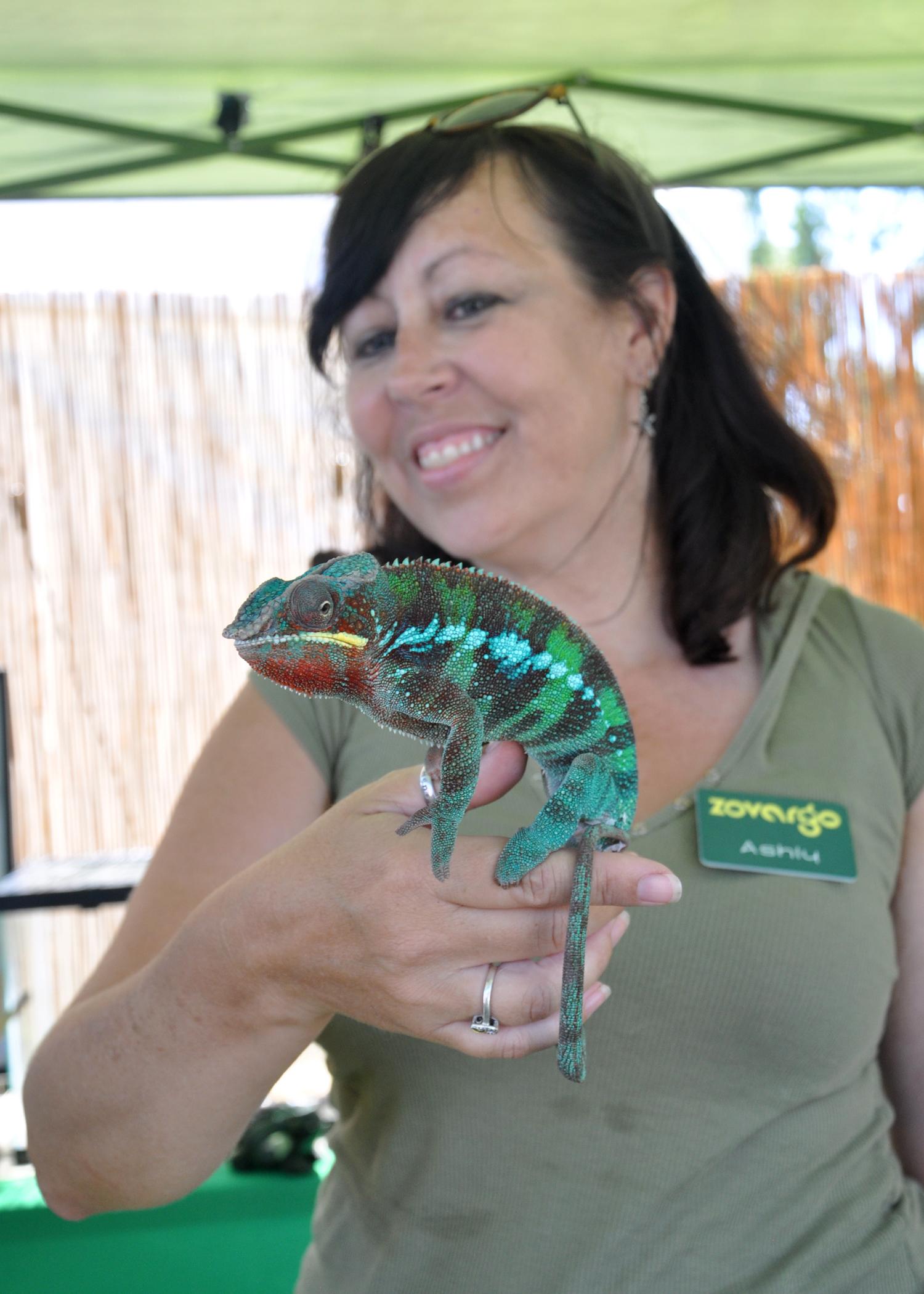 Meet Dimitri our Chameleon Ambassador