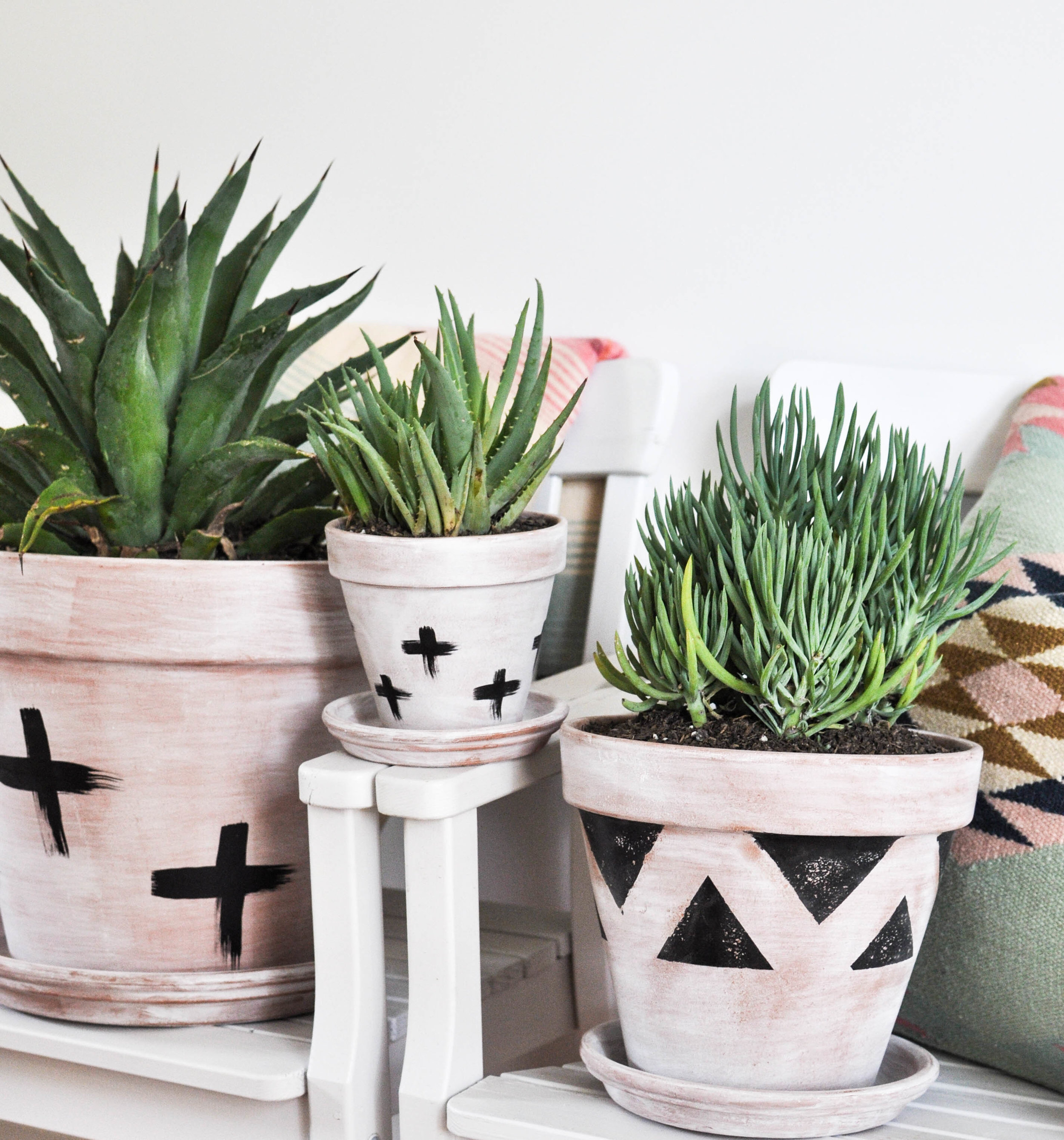 Cactus decor in terra cotta pots