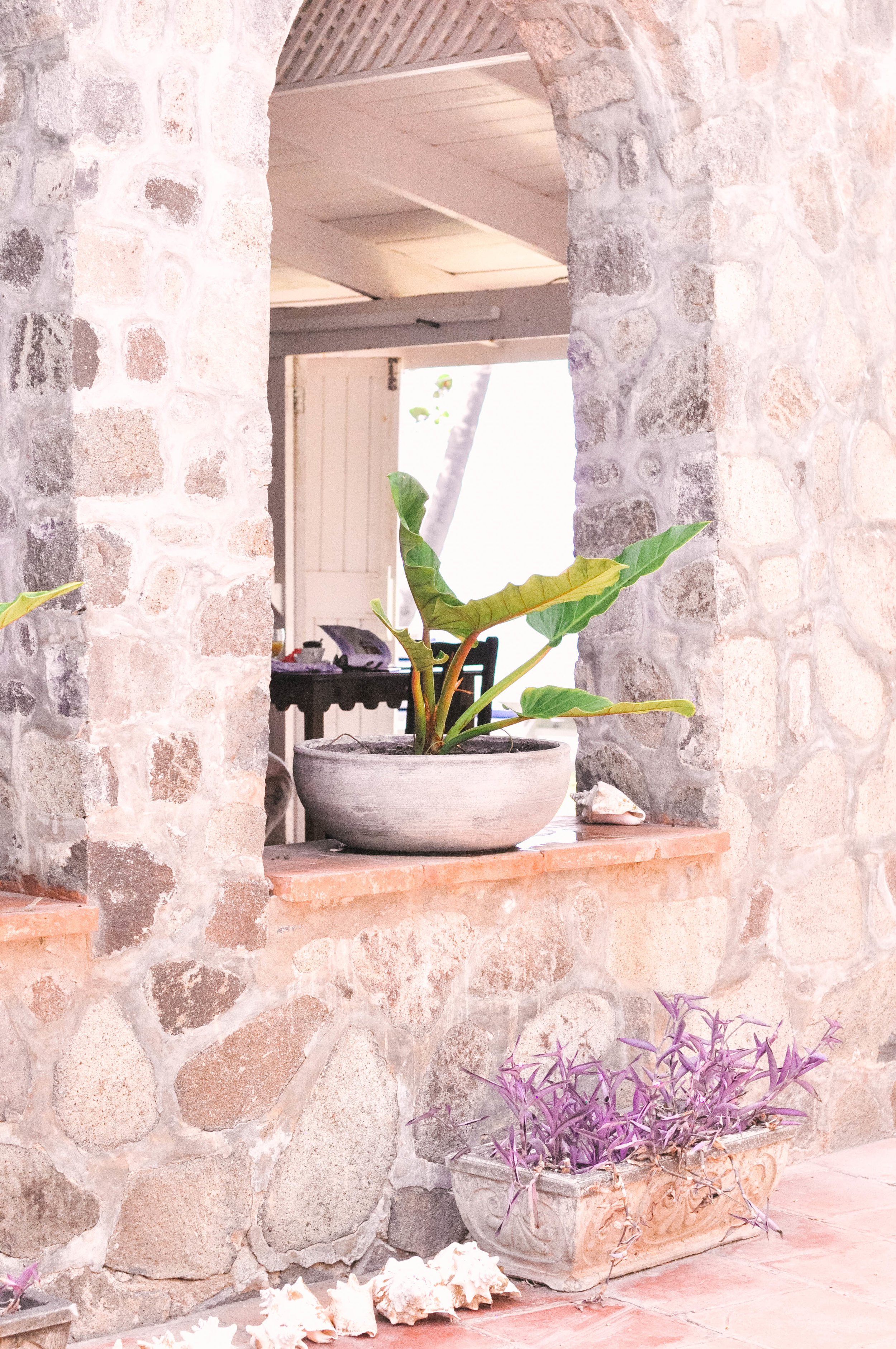 Green plant in stone window