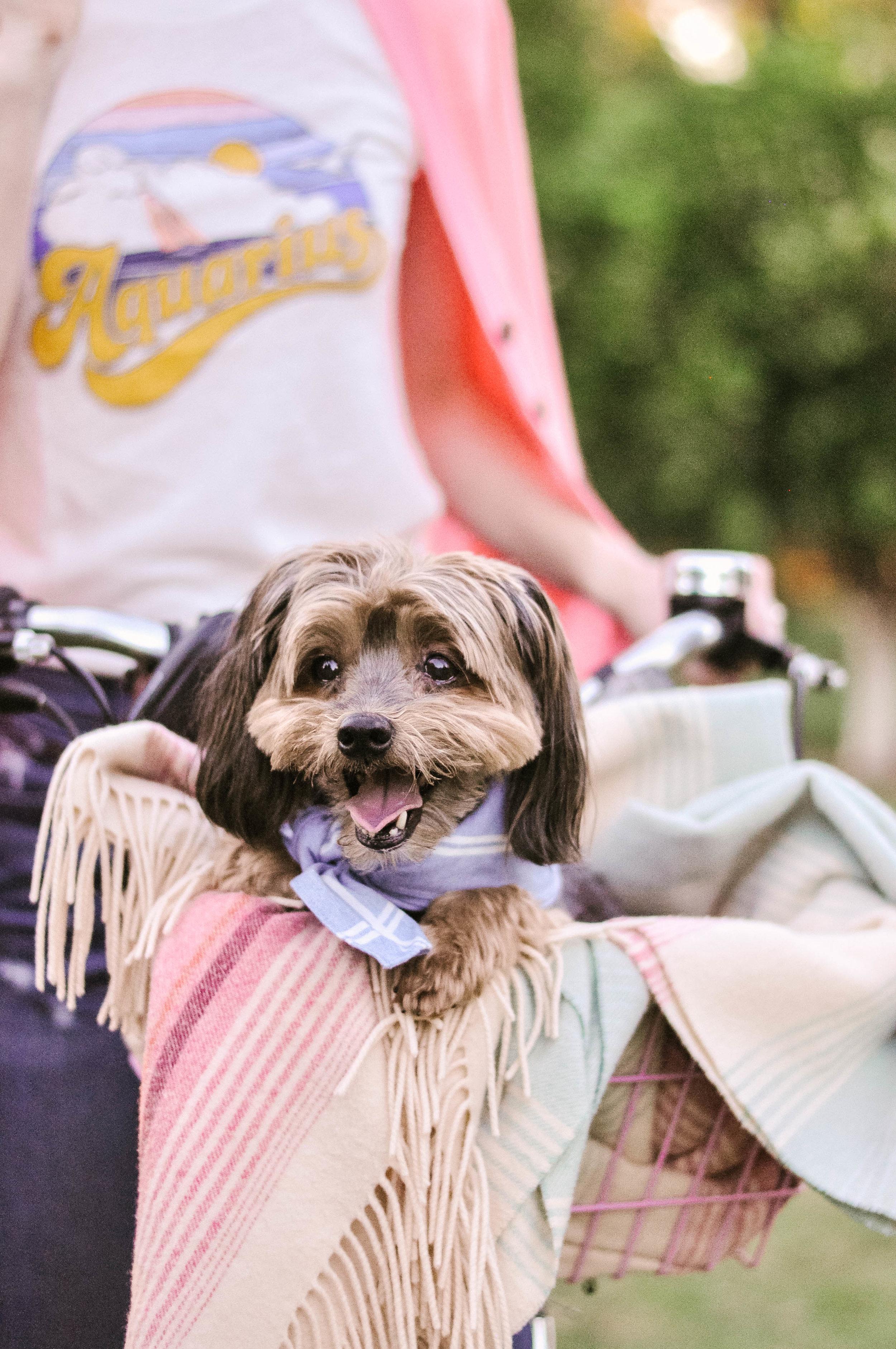 Dog-Bike-Basket.jpeg