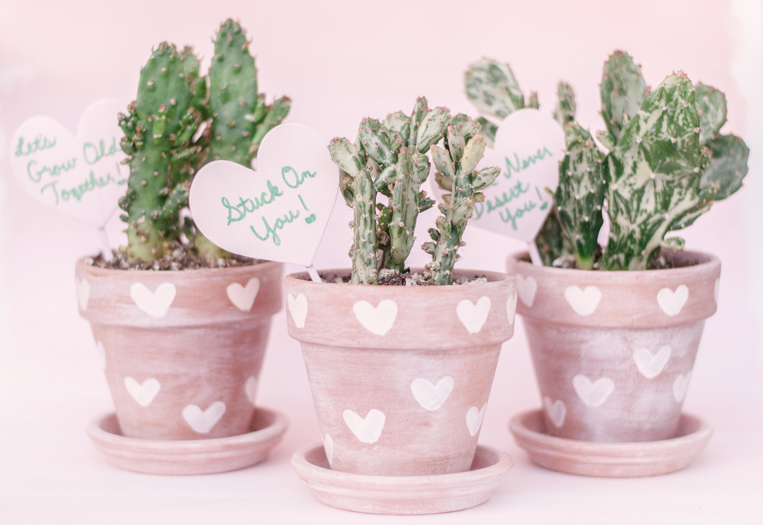 DIY-Painted-Terra-Cotta-Pots.jpg