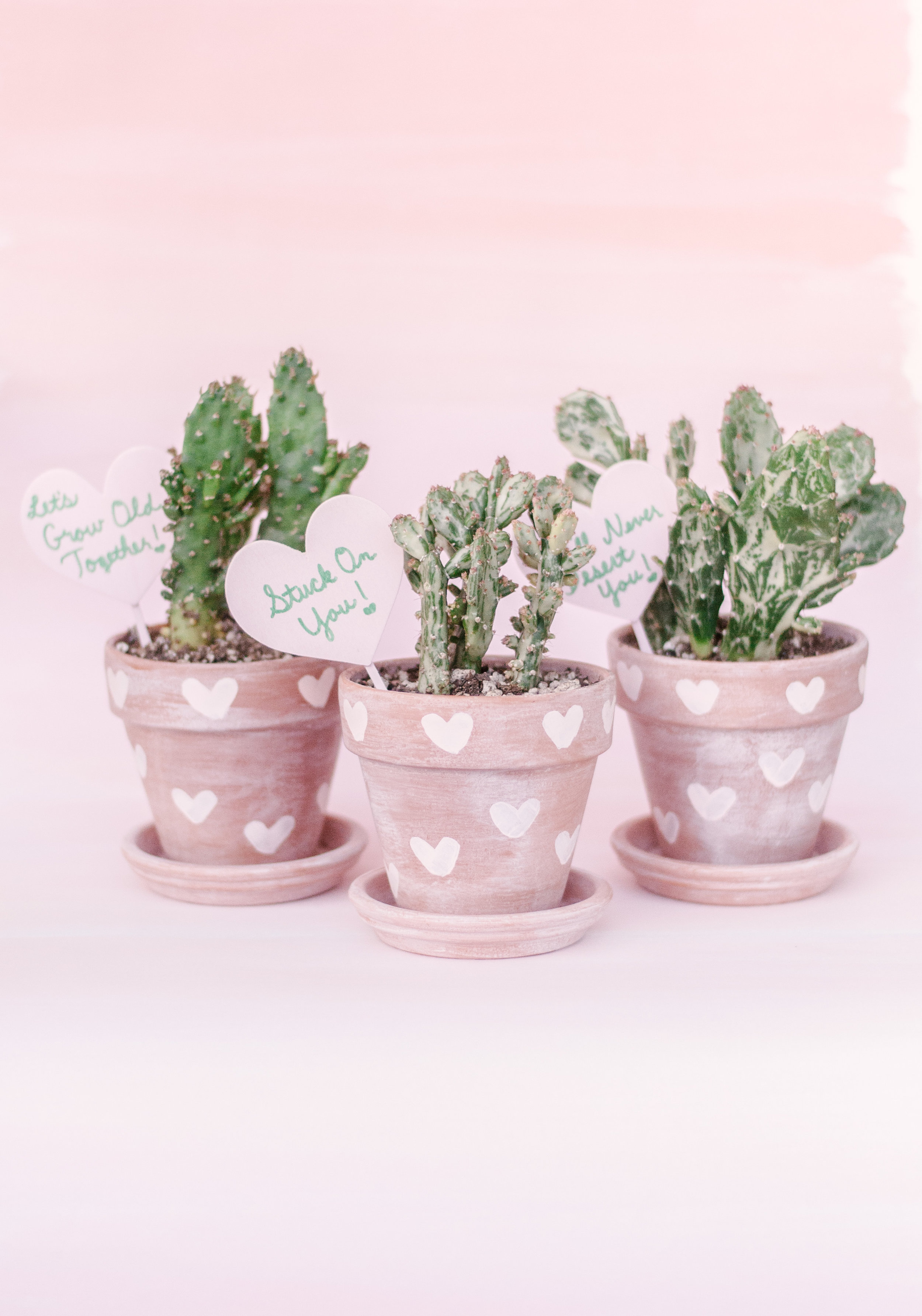 DIY Whitewashed Painted Terra Cotta Pots