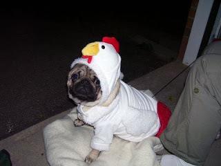chicken+dog.jpg