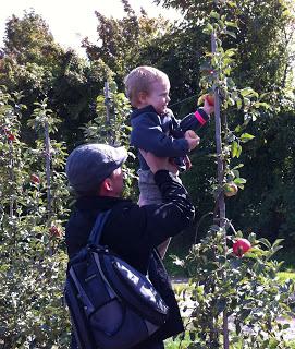 apple+picking.JPG
