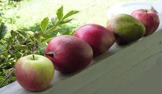 mango+apple.JPG