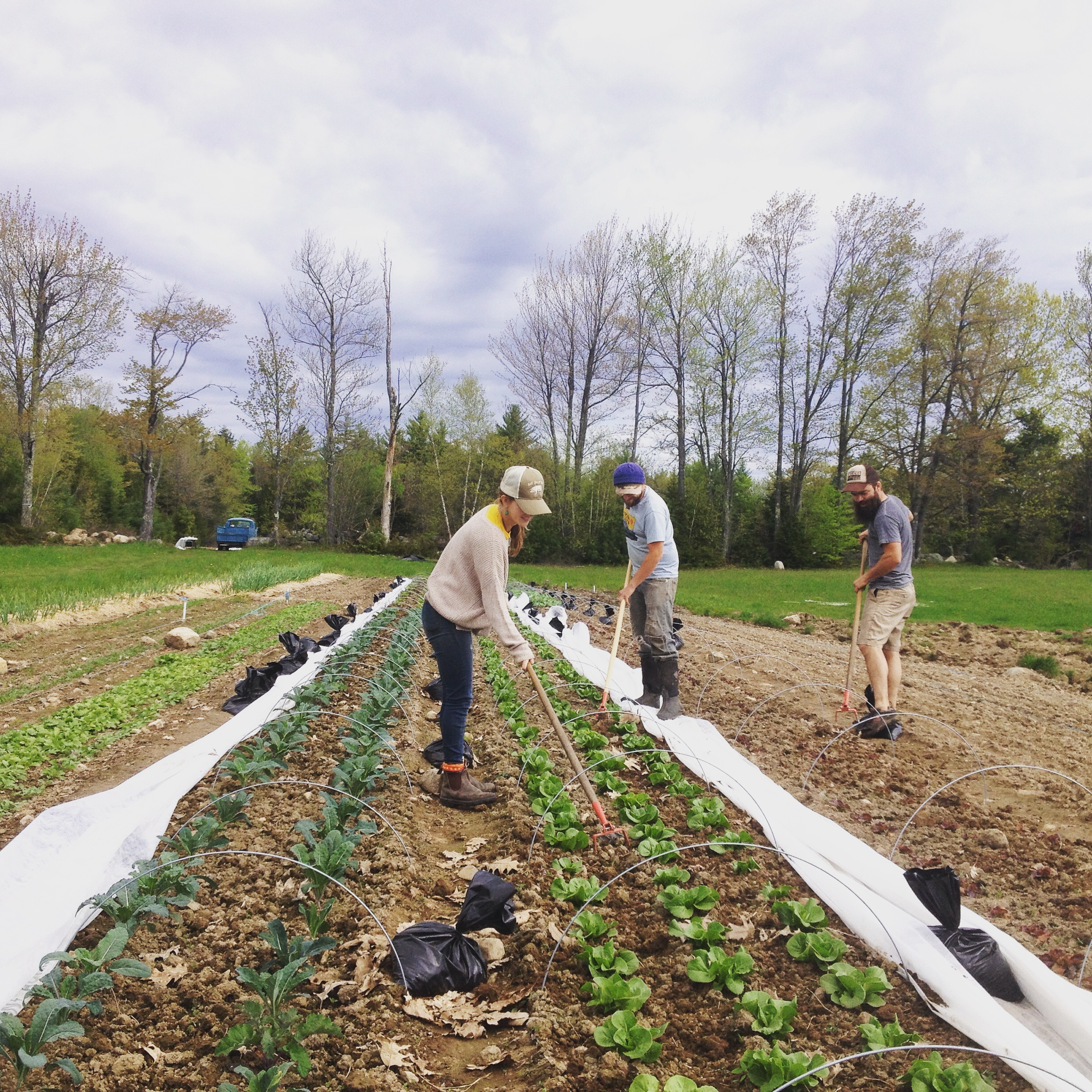 WWOOFing — Patch Farm