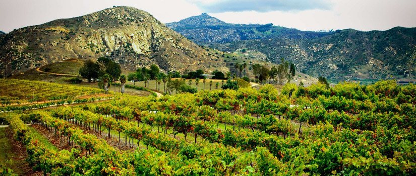 A view of the vineyard from Orfila's website. OMG.