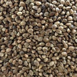 hemp seeds.png