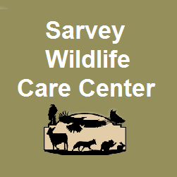 Sarvey Wildlife Care Center -