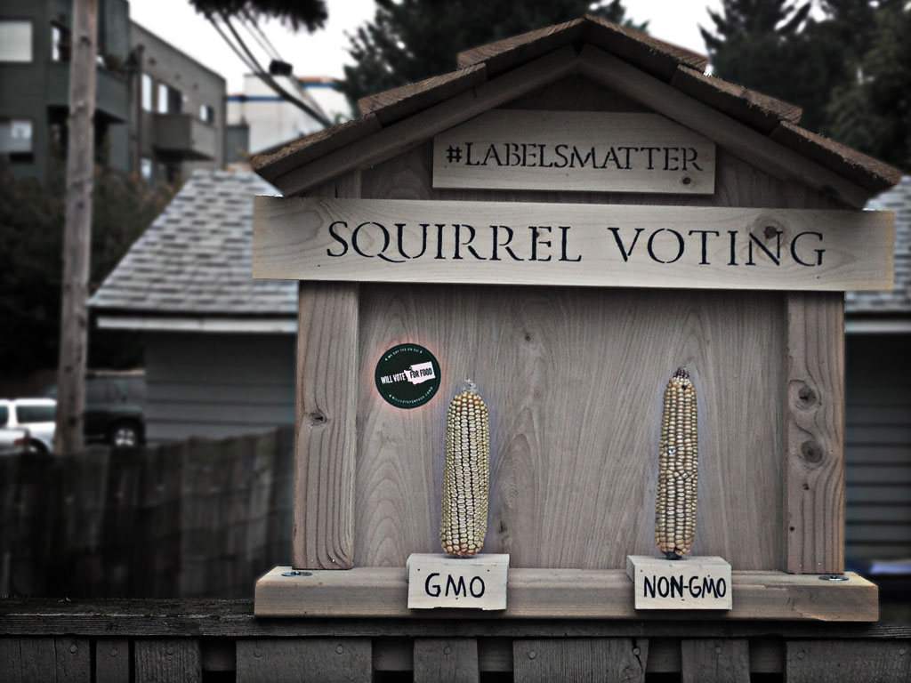 wvff_squirrelvotingbooth.jpg