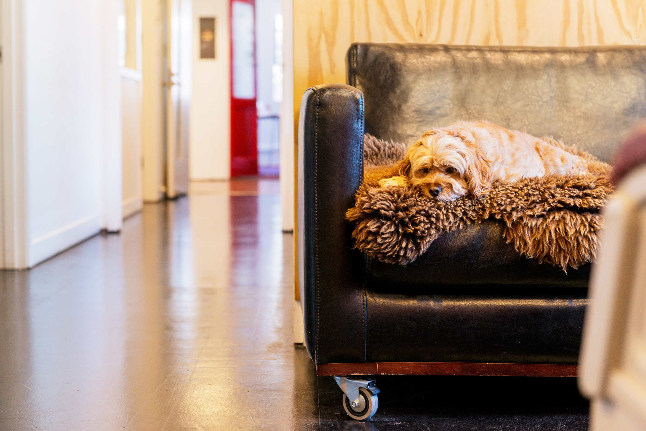 Office Dogs Welcome