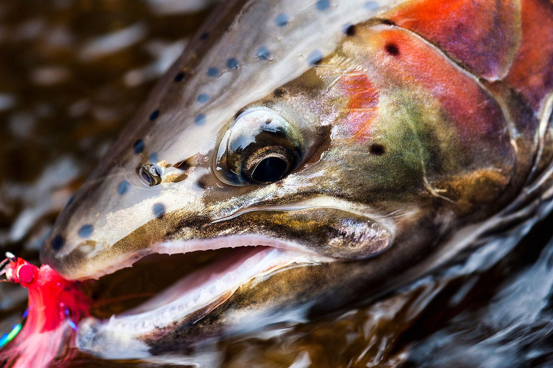 flyfishing -