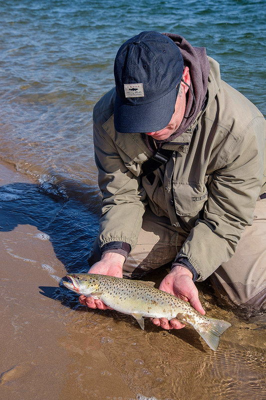 I am pretty sure this is the only sea trout I have ever seen actually landed from the shore - so far……….