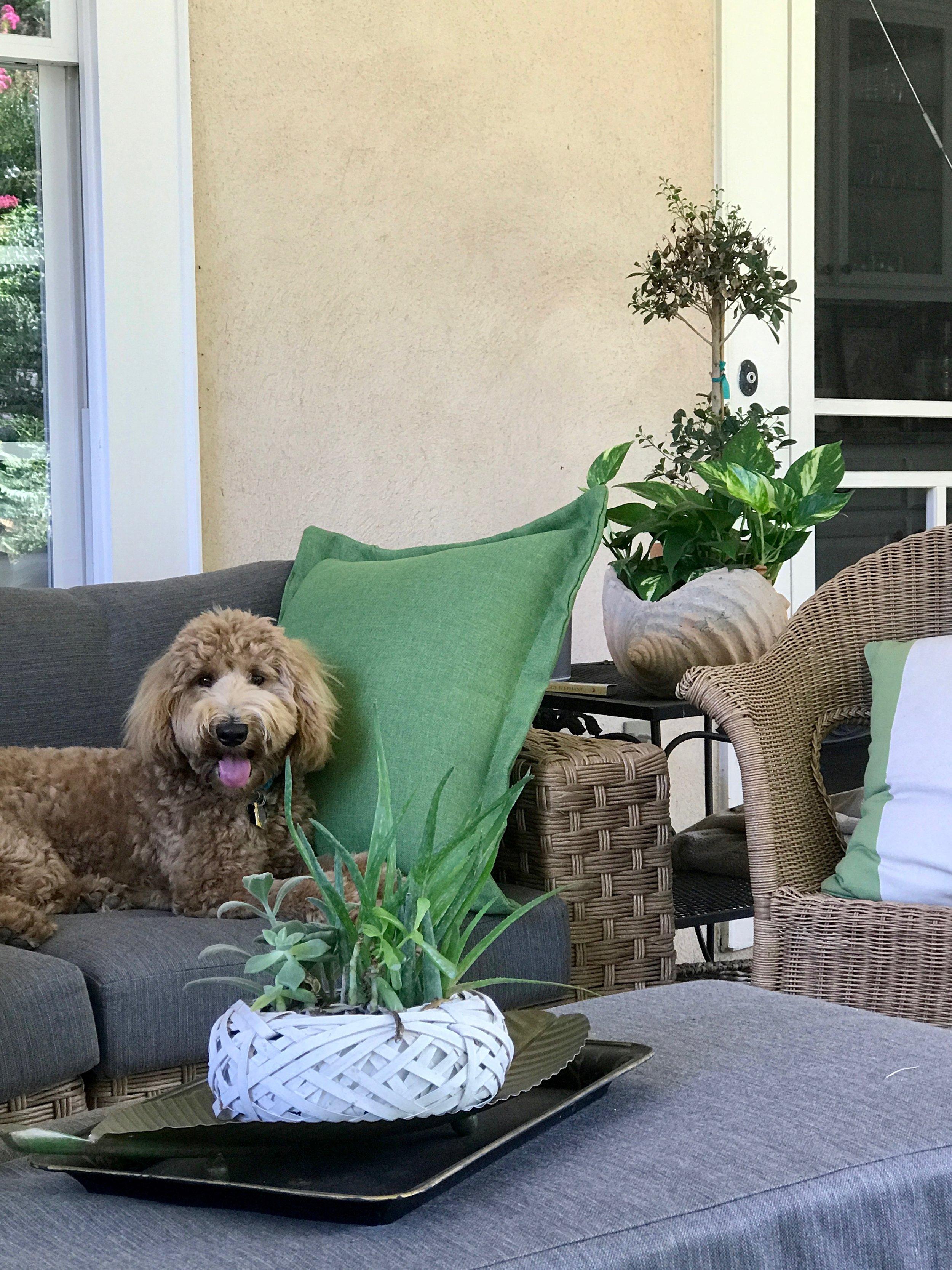 porch pup