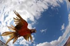 Birds-Eye-View-David-Womach-226x150.jpg