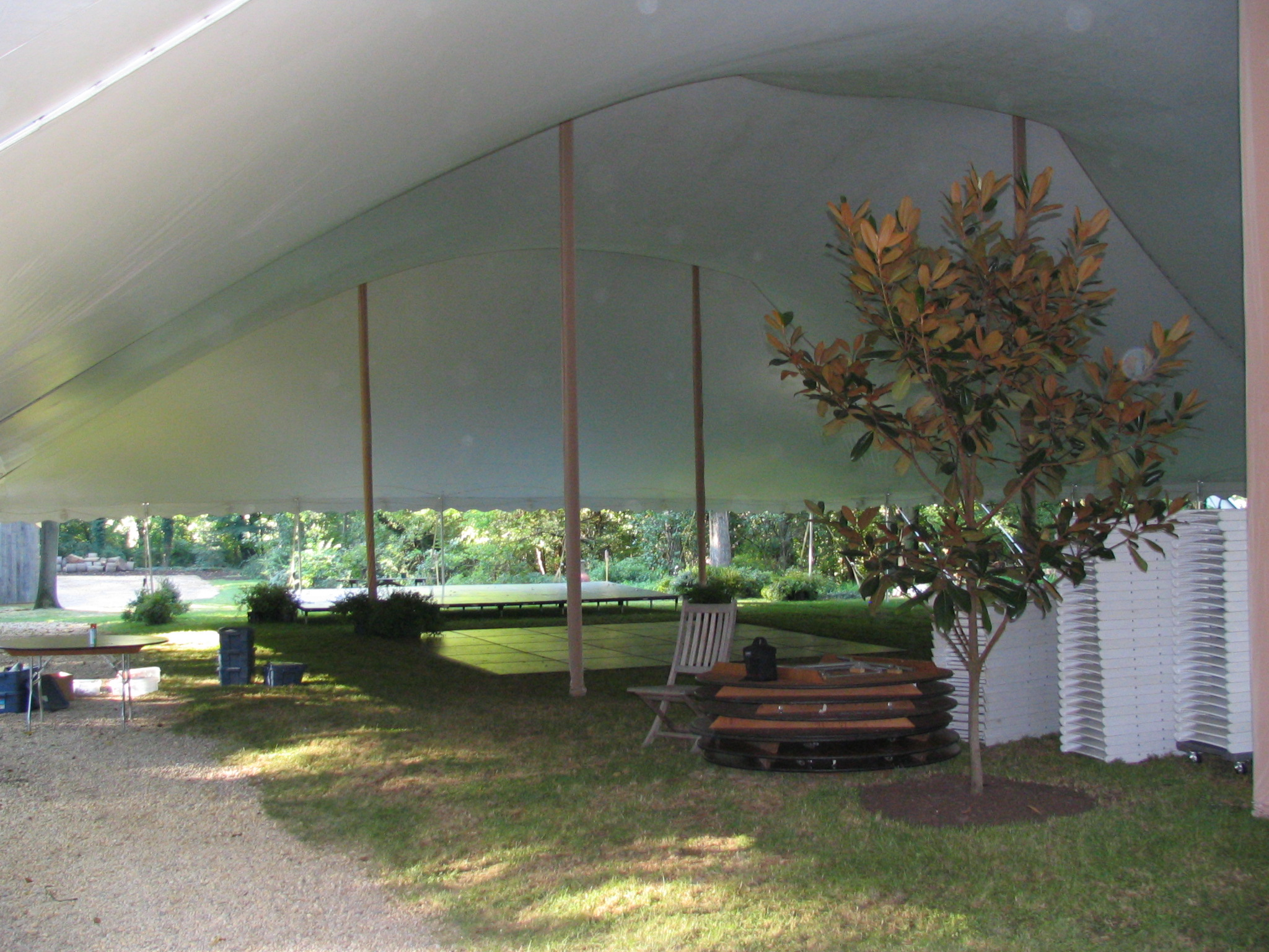 Tent over a tree