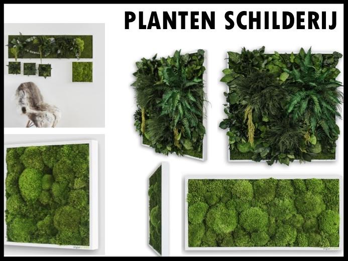 Een mooi relatiegeschenk is dit prachtige plantenschilderij van Style Green. De schilderijen bestaan uit levende planten en hebben geen onderhoud nodig. Een speciaal eco-systeem zorgt ervoor dat de planten zichzelf onderhouden. Prijs per stuk (22 x 22 cm) €53,00. Prijs per stuk (35 x 35 cm) €90,00. Vanaf 50 stuks te bestellen.