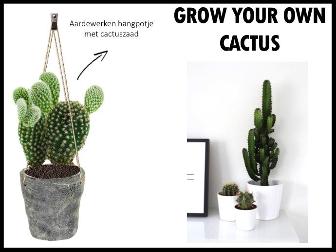 Grow your own cactus met deze set, bestaande uit een aardewerken hangpotje en cactuszaad. Je hebt even geduld nodig, maar dan is dit hangpotje met cactus ook wel echte eyecatcher in huis. Afmetingen pot: 12 x 12 cm.  Prijs per stuk bij 250 stuks €10,50 exclusief BTW.