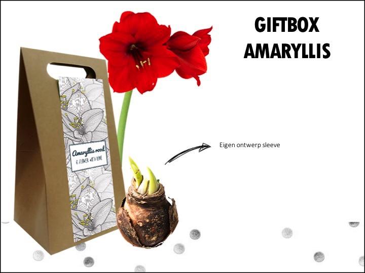 Of wat dacht je van dezegiftbox? De amaryllis brengt warmte in koud dagen, maar ook in het voorjaar staat de amaryllis erg mooi in de huiskamer. De amaryllis kan prima zonder grond.