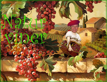 Vinprovning EKO - Naturvin