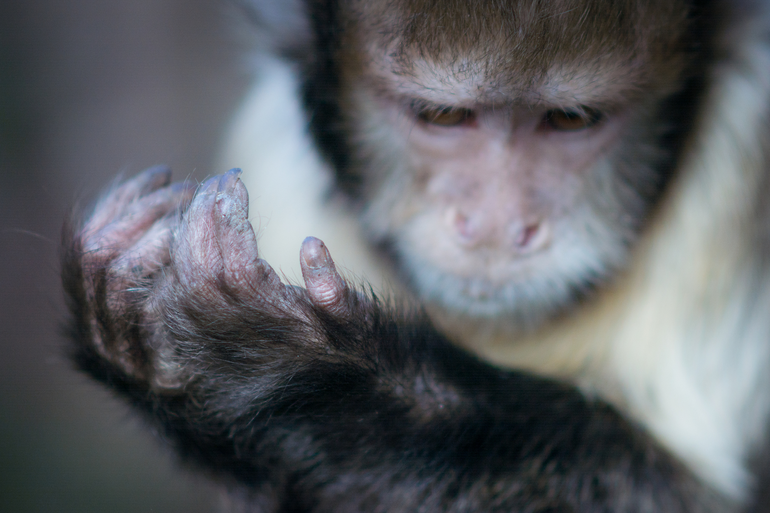 Deference Edinburgh Zoo - Sat 21 February 2015 -2394.jpg