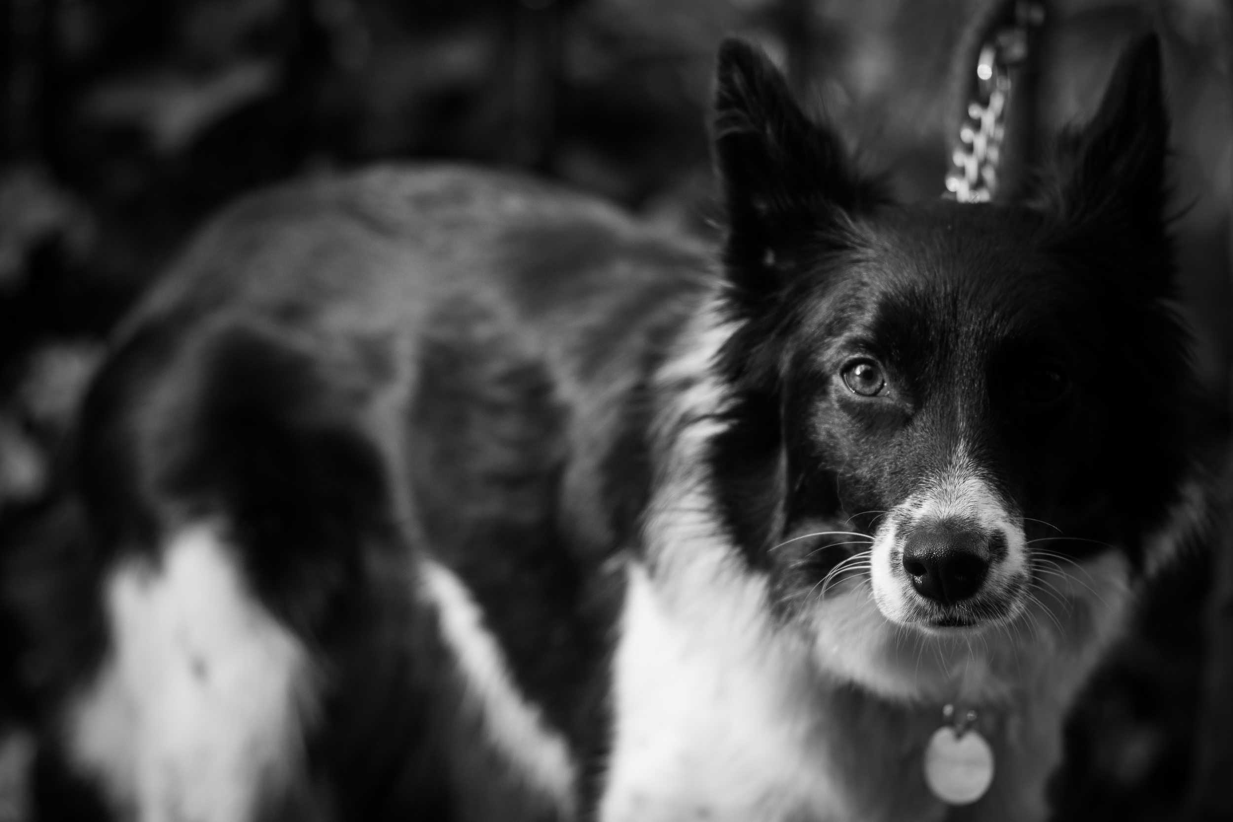 Black and White Collie Water of Leith - Sat 24 January 2015 -8230.jpg