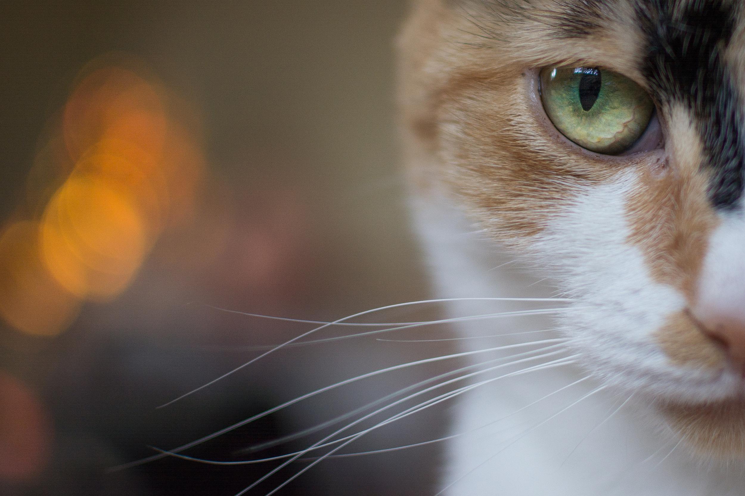 Bokeh Cat - Goytre - Wed 25 December 2014 -7128.jpg