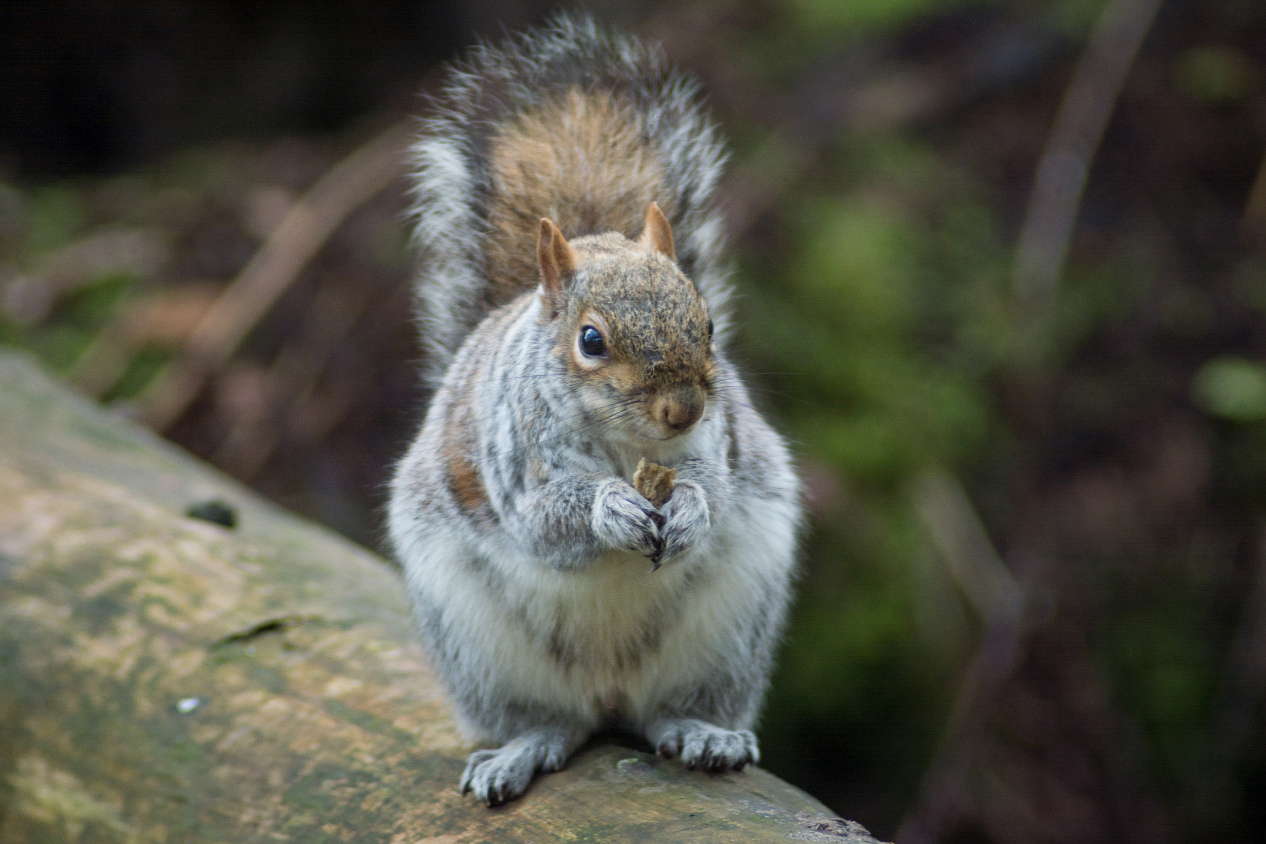 Squirrel Edinburgh Zoo - Sat 7 March 2015 -2997.jpg