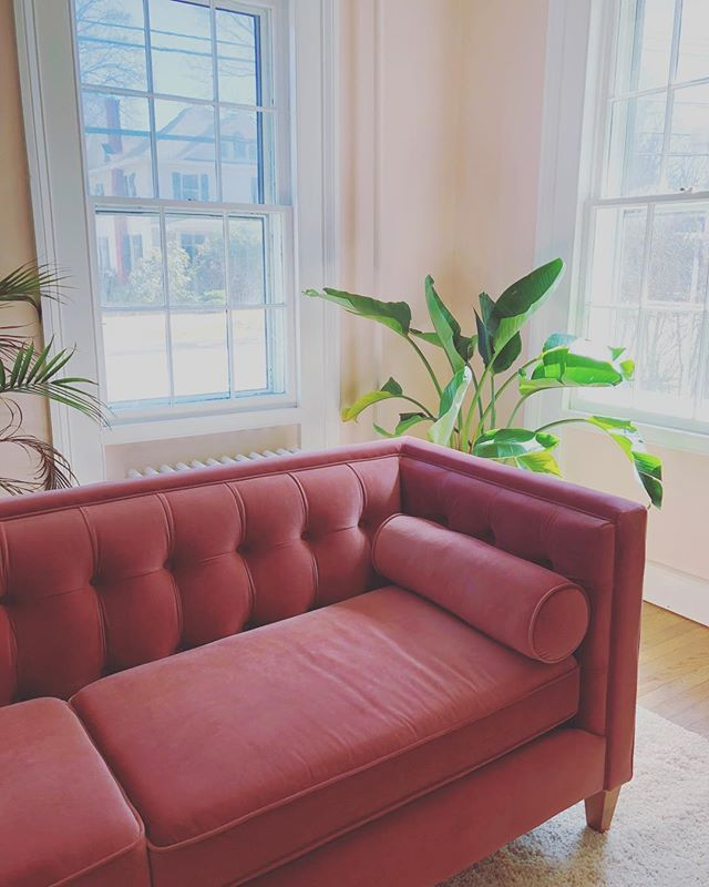 Think I'll stay here awhile...👌🏻 #plantsonpink #kinderhookny #hudsonvalley