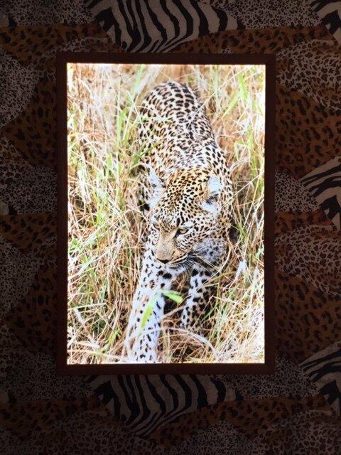 Leopard in Grasses