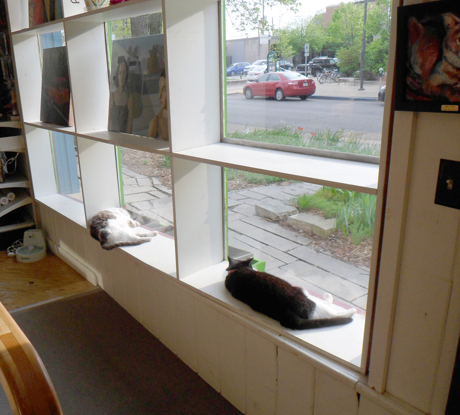 reduced cats with paintings in the window.jpg