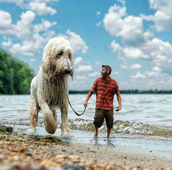 dog-on-beach.png