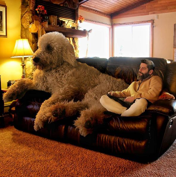 dog-on-sofa.png