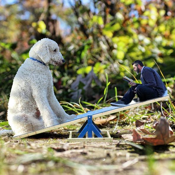 playing-dog.png