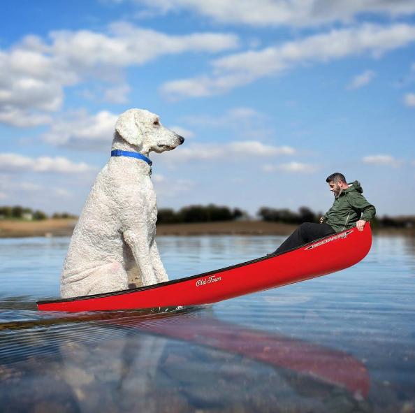 boating-dog.png