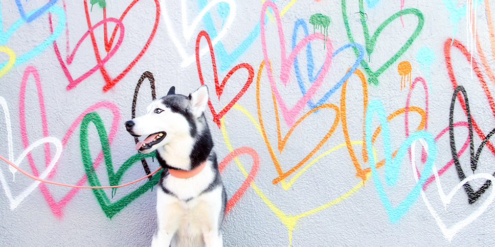 pink dog collar and leash