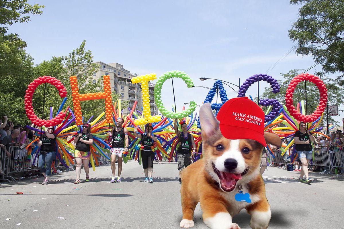 puppy chicago