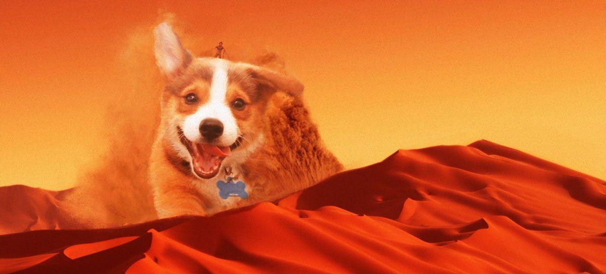 puppy desert