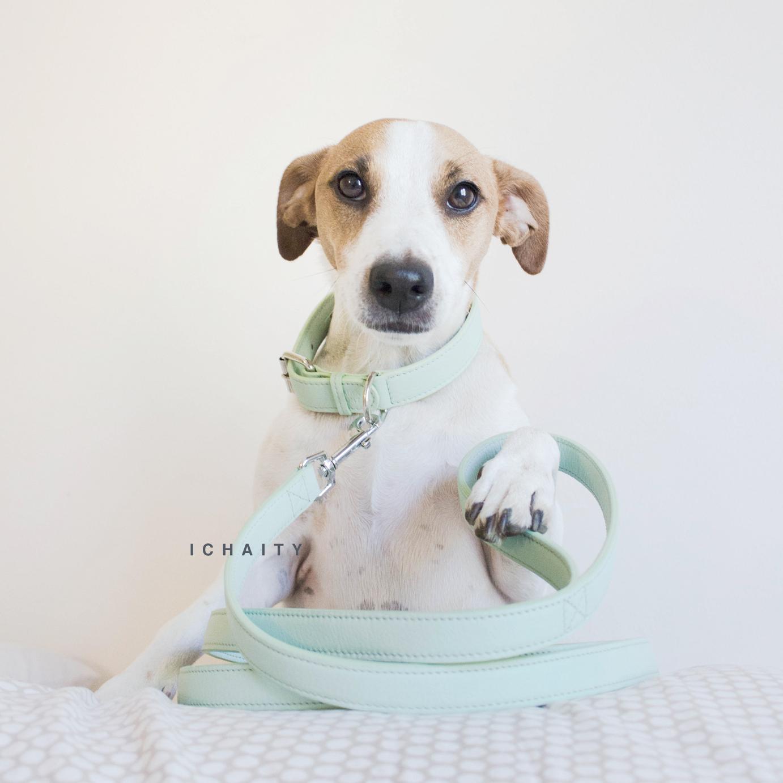 dog collar mint