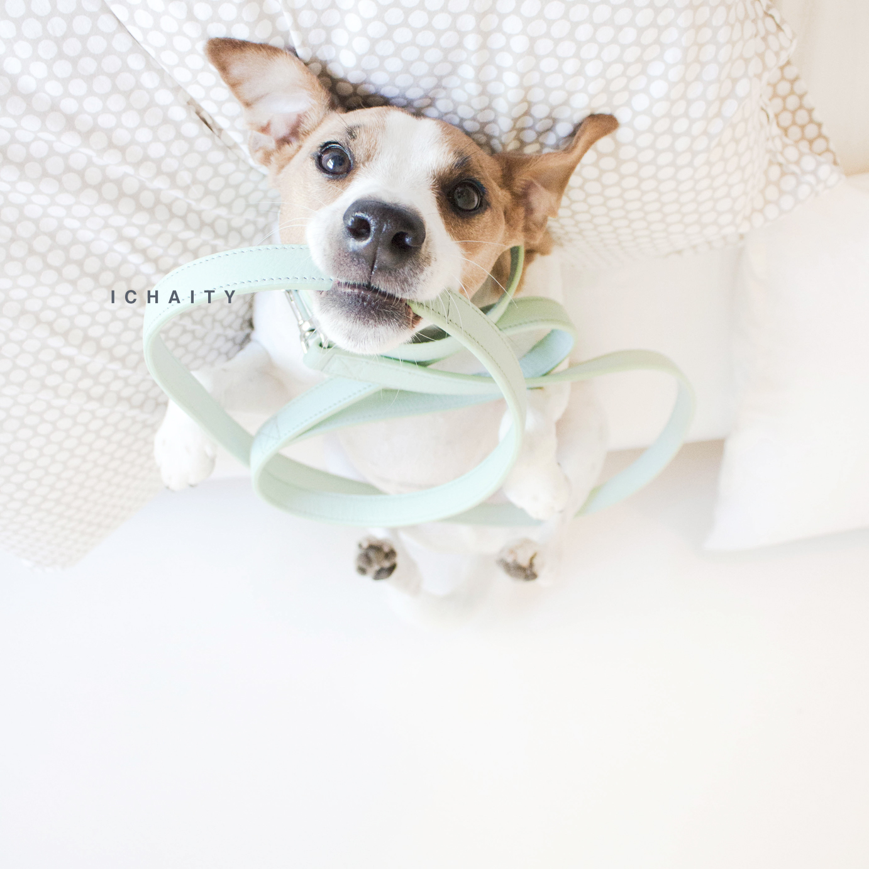 light blue dog collar