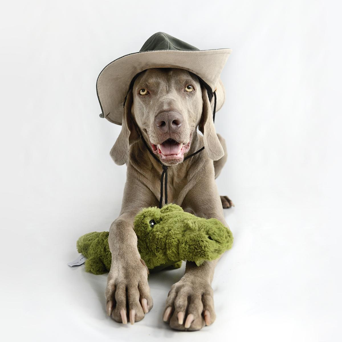 crocodile dog toy