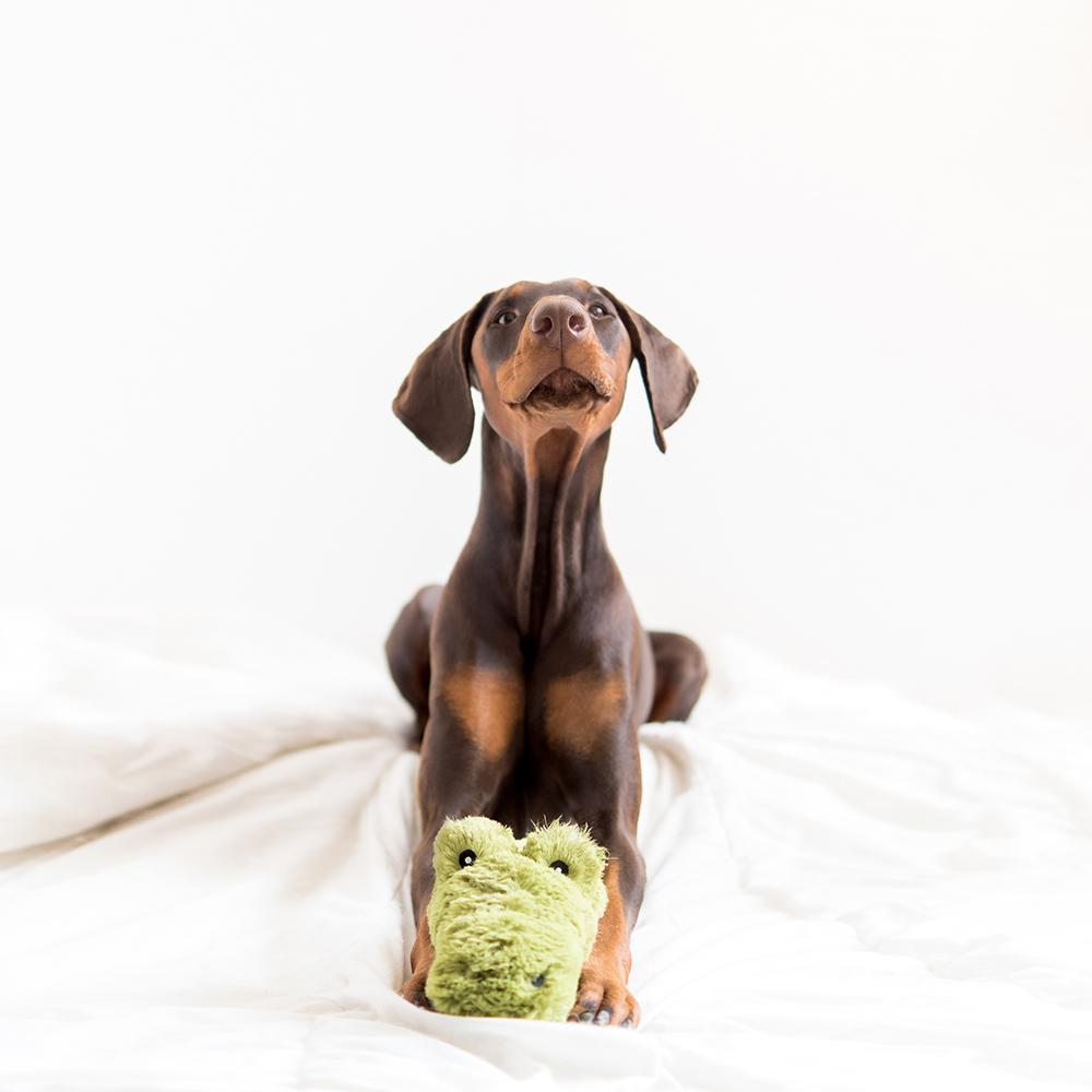 alligator dog toy