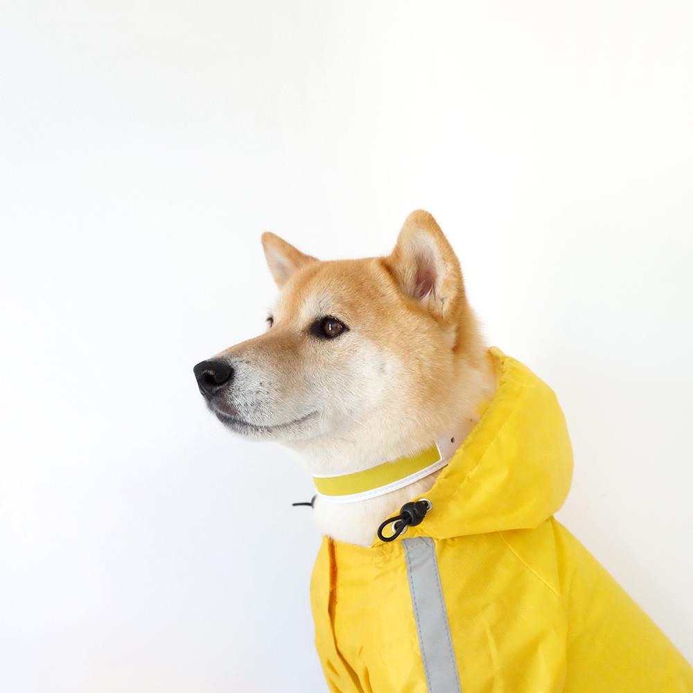 shiba dog collar yellow