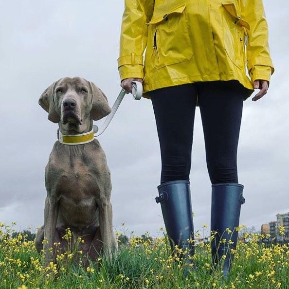 We're ready 👌🏻🍁 #goals #likeownerlikedog #dogfashion #laikahunt #winteriscoming #matchingoutfits #fashiondog #dogcollars @danidlm