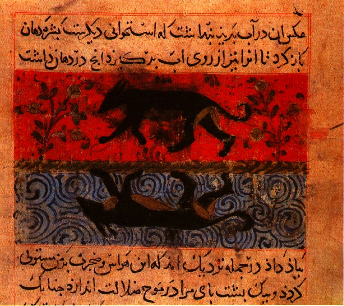 islamic dog.jpg