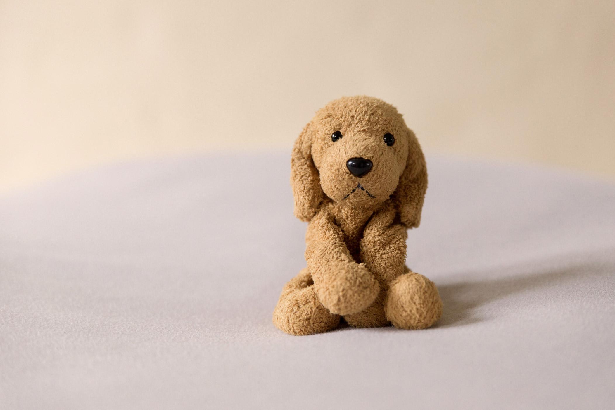 newborn-photos-st-albans-props-doggy-bear.jpg