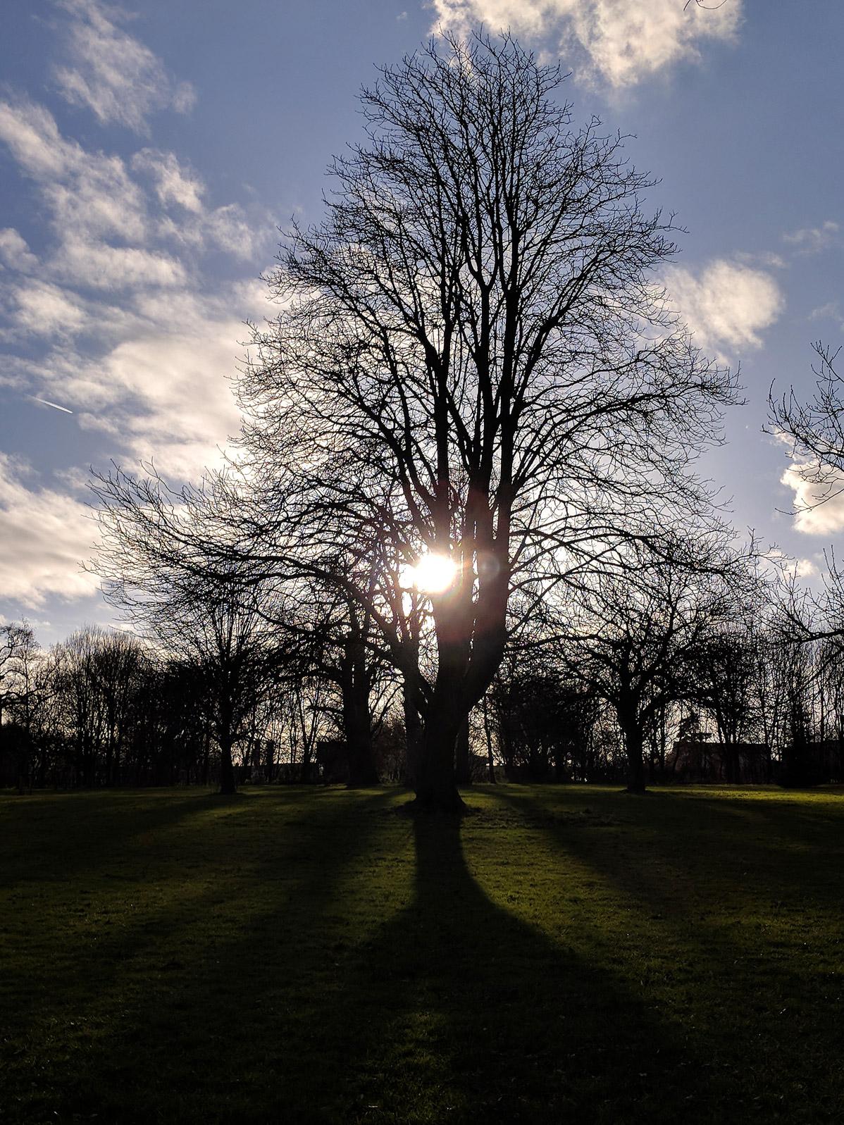 newborn-photography-hemel-hempstead-sunset-tree.jpg