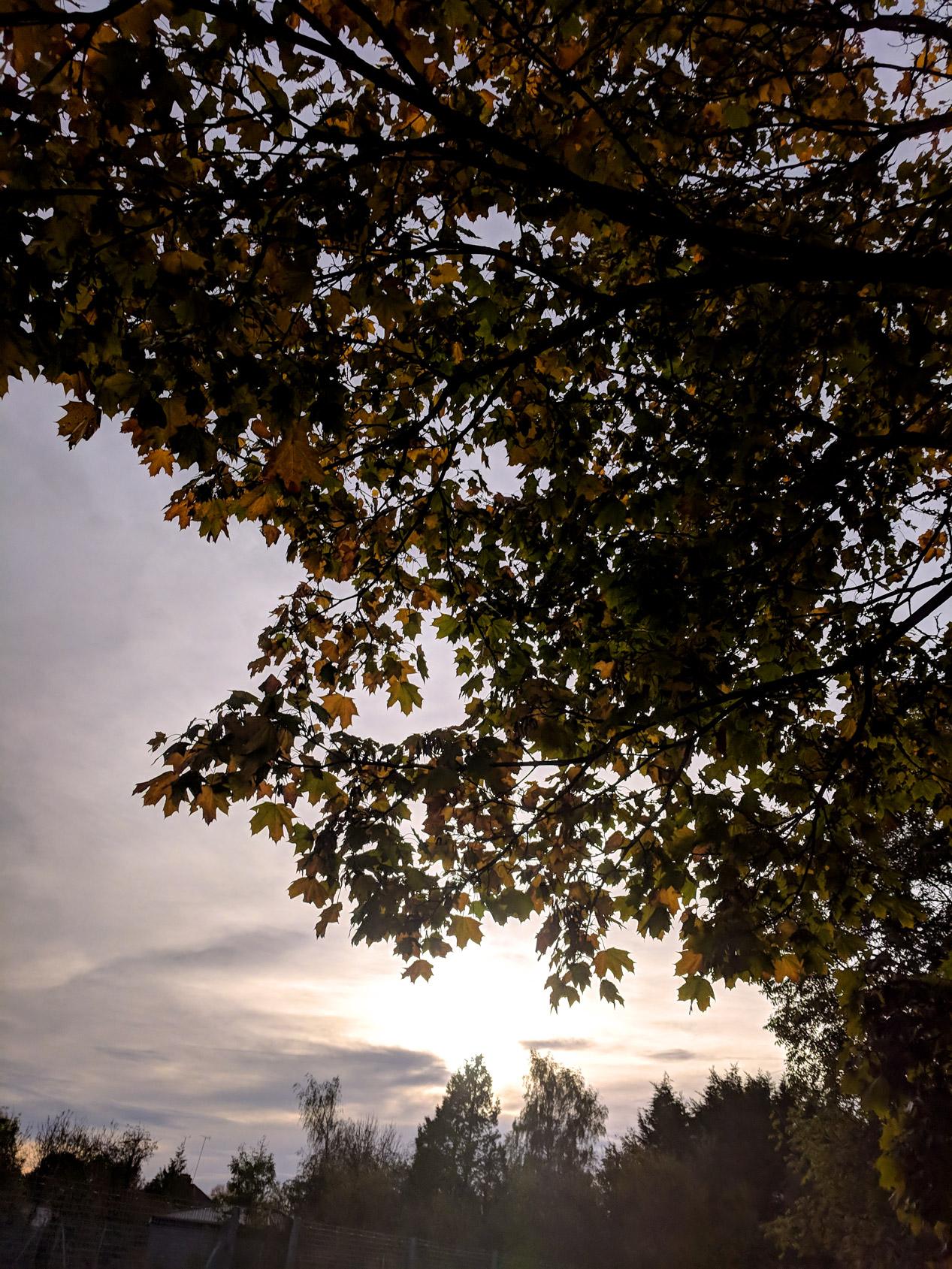 photo-project-2018-October-8.jpg