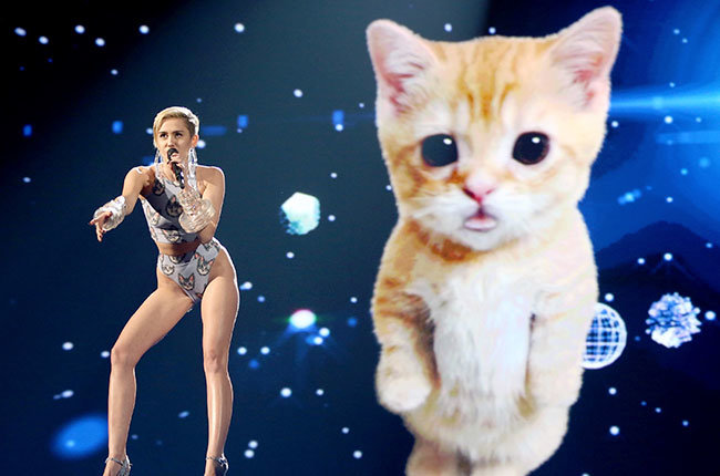 Miley Cyrus & Her Cat in 2013  Miley Cyrus performs onstage during the 2013 American Music Awards at Nokia Theatre L.A. Live on November 24, 2013 in Los Angeles, California.